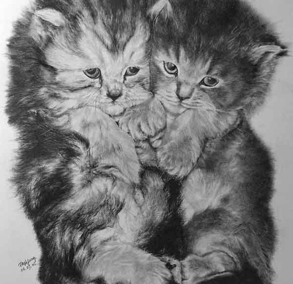 kittens pencil drawings