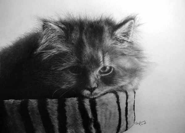 beautiful pencil drawings