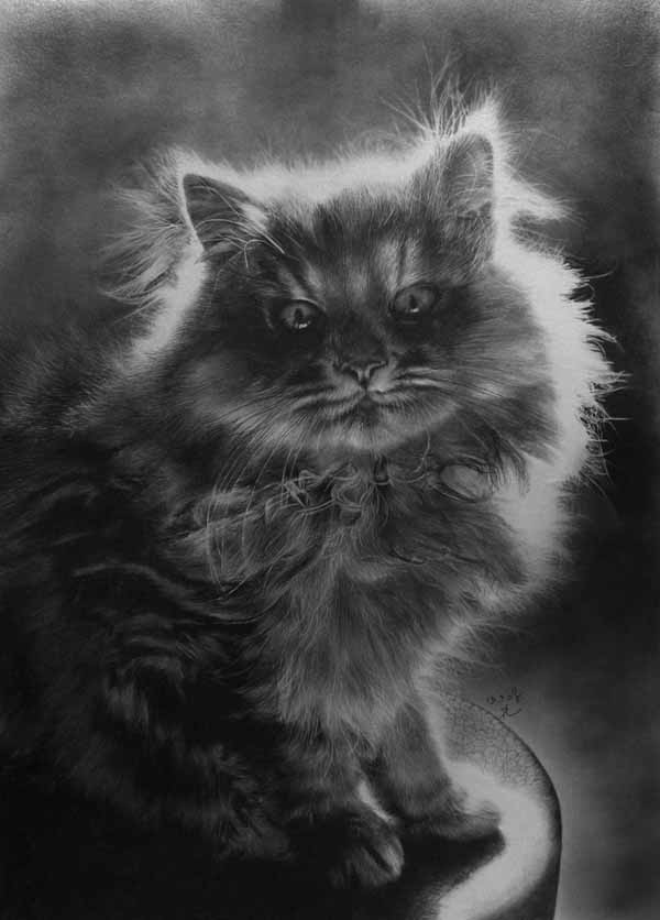 cat realistic pencil drawings