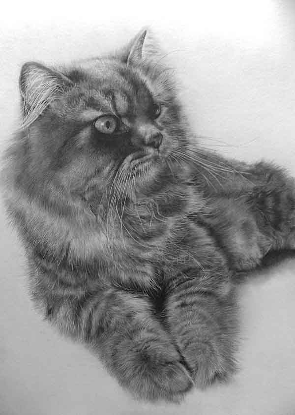amazing pencil drawings of animals