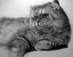 amazing cat pencil drawing