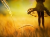 harvest-and-beauty-1440x900
